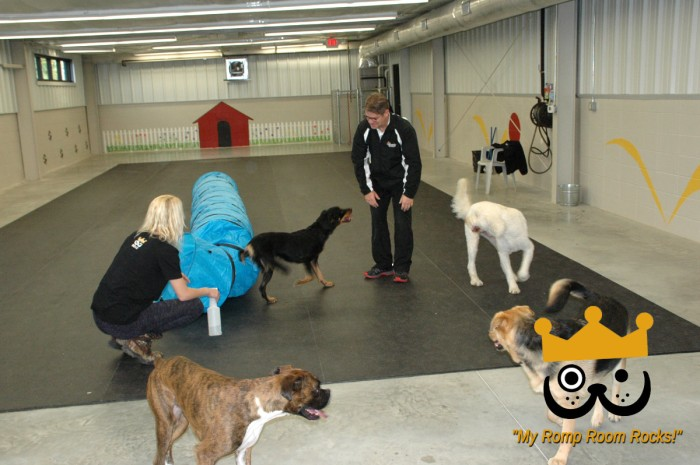 Dogs Love Bevo's Spacious Daycare Romp Room