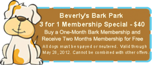 3 for 1 Bark Park Membership